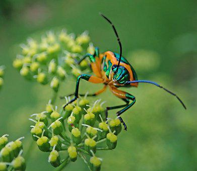 Beetle, Insect, Plant, Garden, Pest, Nature