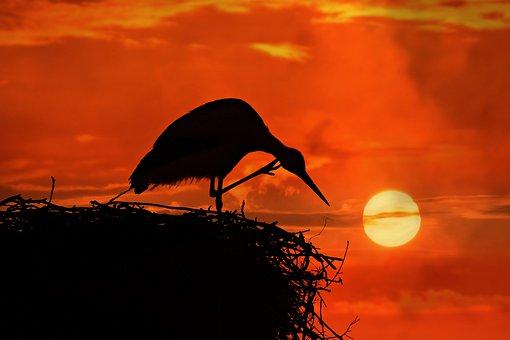 Stork, Bird, Animal, Nest, Scratching, Leg, Head, Beak