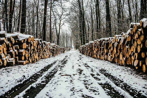 Winter, Way, Snow, Landscape, Nature, Tree, Forest