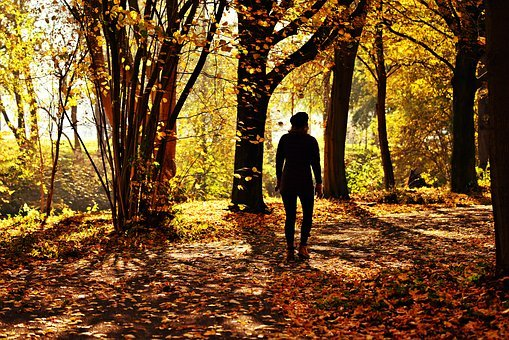 Woman, Person, Walking, Path, Tree, Autumn Leaves, Park