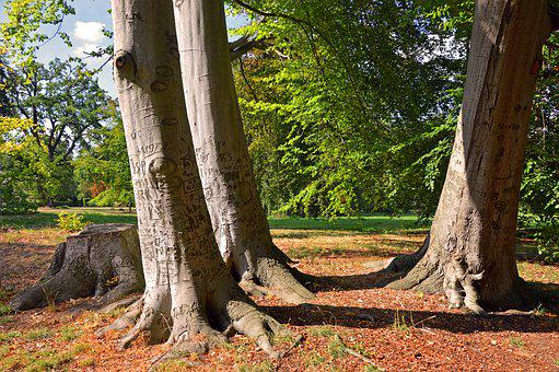 Trees, Strains, Tree Trunks, Roots Of Nature, Park
