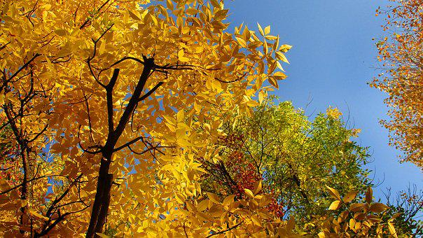 Leaves, Trees, Crown, Autumn, Yellow, Landscape, Tree