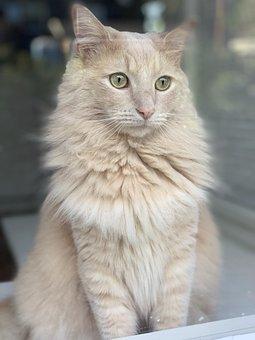 Kitty, Window, Animal, Kitten, Cute, Looking, White