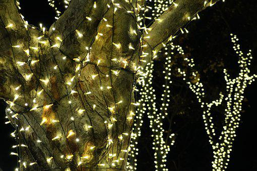 Illumination, Beautiful, Tree, Gold, Street, Tokyo