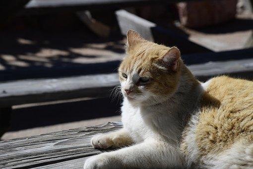 Animal, Cat, Pets, Trust, Head, Domestic, Mammal
