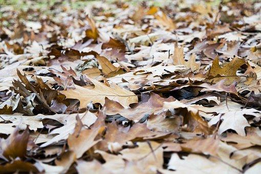 Leaves, Brown, Elijah Clerici, Autumn, Nature, Colorful