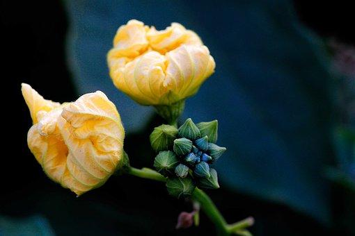 Flower, Yellow, Sun Flower, Nature, Sunflower, Summer