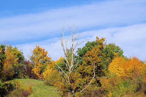 Autumn, Trees, Nature, Landscape, Forest, Leaves