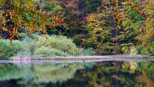 Poland, Bieszczady, Lake Duszatyńskie