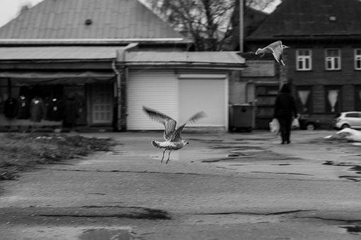 Gull, Seagull, Bird, Flight, Animal, Nature, Flying