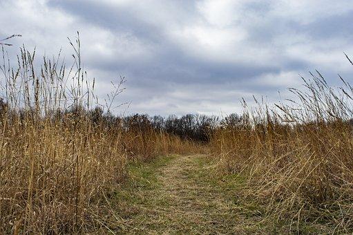 Field, Prairie, Winter, Path, Trail, Nature Trail