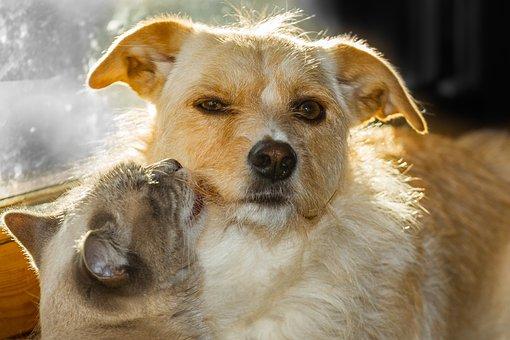 Dog, Cat, Pet, Animal, Love, Trust, Friendship, Friends