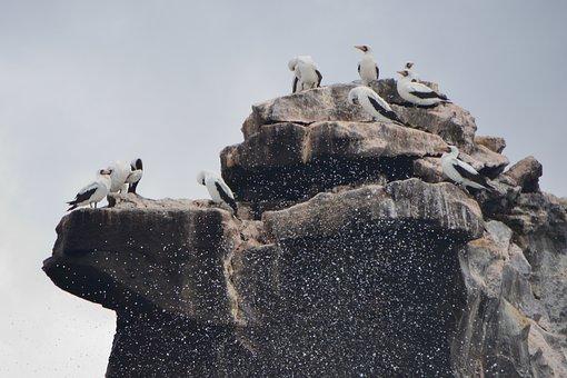 Birds, Rock, Waves, Nature, Landscape, Galápagos, Rocks