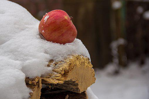 Apple, Snow, Firewood, In Winter, Fruit, Red, Cold
