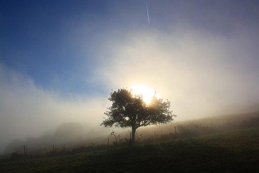 Autumn, Fog, Tree, Backlighting, Sun, Morgenstimmung