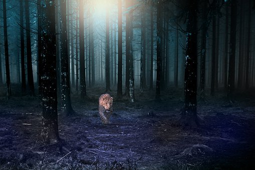 Forest, Jaguar, Dark, Night, Light, Fear, Tree