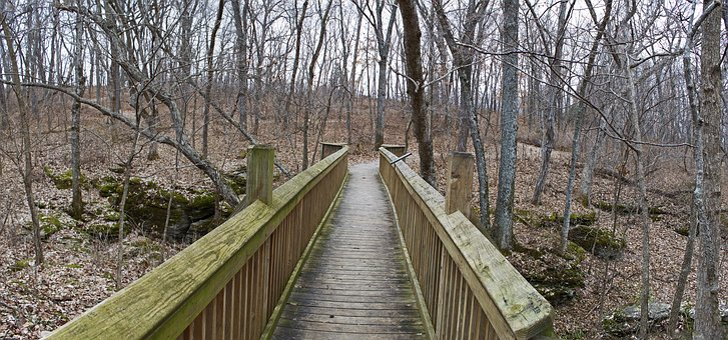 Bridge, Walkway, Pathway, Path, Trail, Nature, Trees