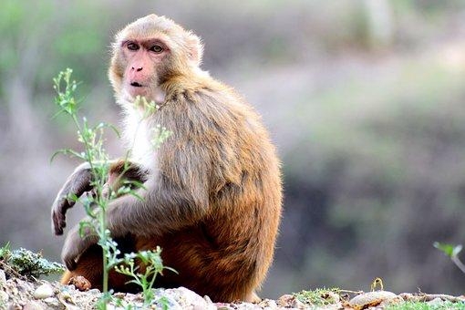 Animals, Monkey, Wild, Mammal, Gorilla, Zoo, Portrait