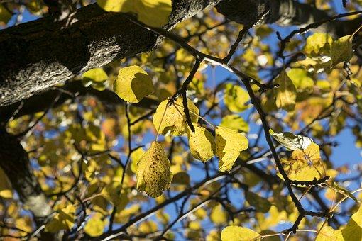 Leaves, Autumn, Yellow, Autumn Colors, Elijah Clerici