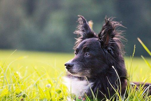Dog, Animal, Pet, Dog Head, Animal Portrait, Attention