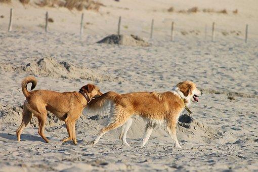 Dogs, Beach, Sand, Fun, Play, Run, Pets, Sea, Summer
