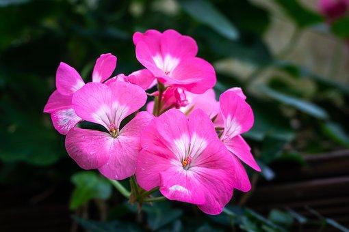 Pink Flower, Botanical Garden, Light, Greenhouse