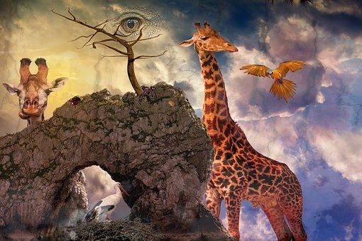 Composing, Fantasy, Mystical, Photomontage, Fairytale