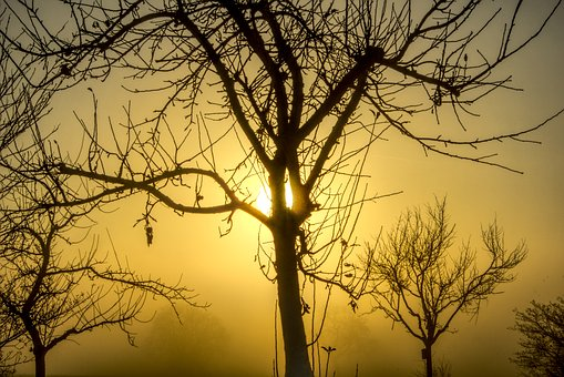 Trees, Sun, Backlighting, Fog, Aesthetic, Branches