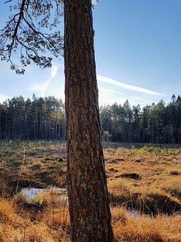 Sunlight, Case, Forrest, Sveroge, Grass