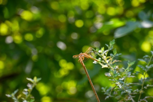 Dragonfly, Halo, Stop In The Branches, Green Leaf