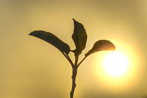 Sun, Backlighting, Fog, Aesthetic, Branches, Haze, Hazy