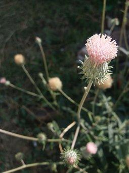 Flower, High Noon, Love, Bloom, Blossom, Springtime