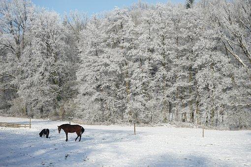 Horn-bad Meinberg, Wilberg, Horses, Winter, Lip