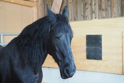 Horse, Stallion, Horses, Animal, Gallop, Sport