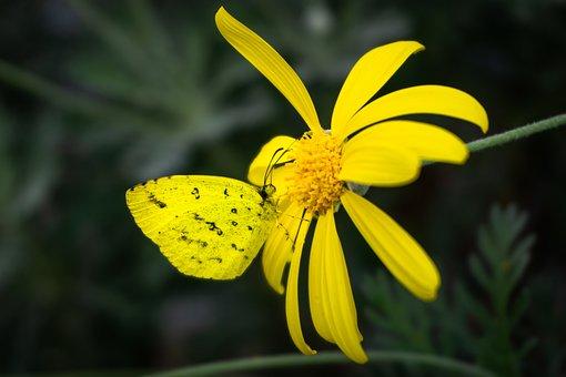 Yellow Flowers, Butterfly Botanical Garden, Light