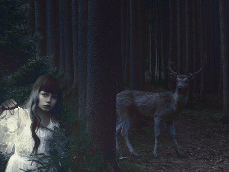 Girl, Forest, Hirsch, Lantern, Trees, Nature, Night