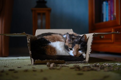 Animal, Cat, Cardboard, Pet, Mieze, Cat Face, Box