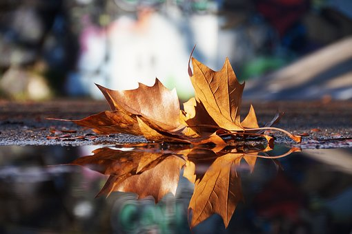 Autumn, Mirroring, Water, Rest, Mood, Reflection, Leaf