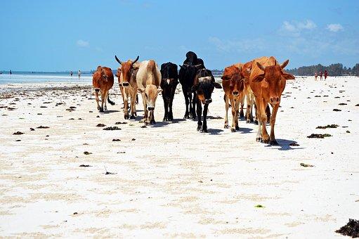 Strandkh, Beach, Ocean, Sea, Vacations, Legs, Summer