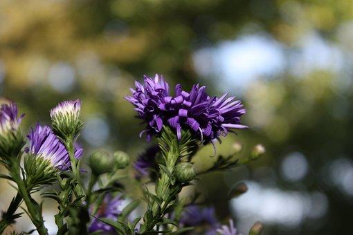 Nature, Flower, Thistle, Summer, Zoom