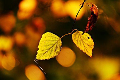 Autumn Leaf, Twig, Vein, Branch, Tree, Pattern