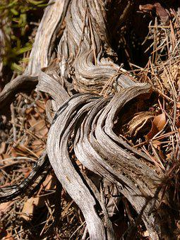 Trunk, Stem, Wood, Knotty, Root