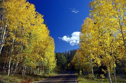 Arizona Aspen Autumn, Fall, Autumn, Aspen, Grand