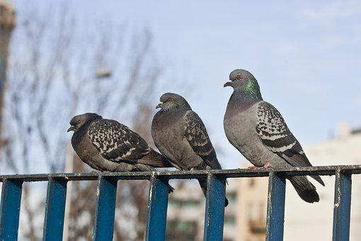 Dove, Bird, Pen, Flight, Nature, Wing, Room, Beak