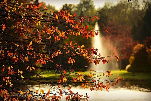 Fountain, Pond, Park, Branch, Leaves, Autumn Foliage