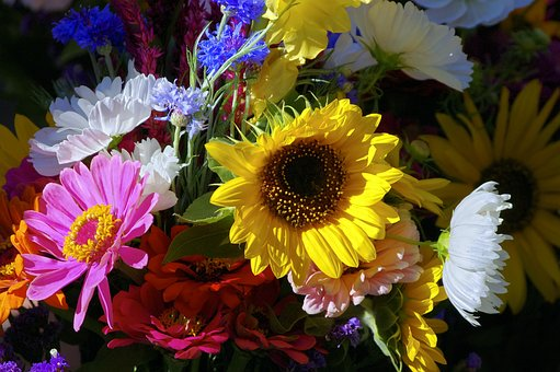 Farm Market Flowers, Colorful, Bright, Red, White