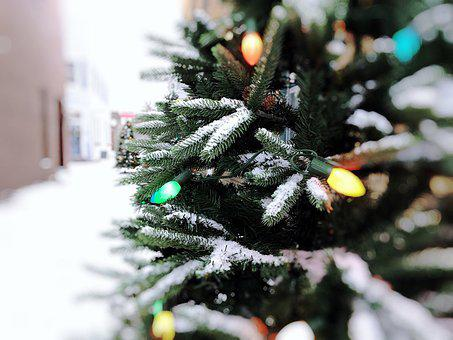 Christmas, Tree, Lights, Decoration, Celebration, Xmas