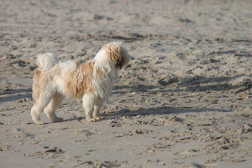 Dog, Beach, Sand, Fun, Play, Stand, Pet, Sea, Summer