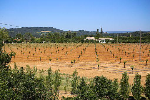 Fruit Trees, Fruit Fields, Drought, South Of France