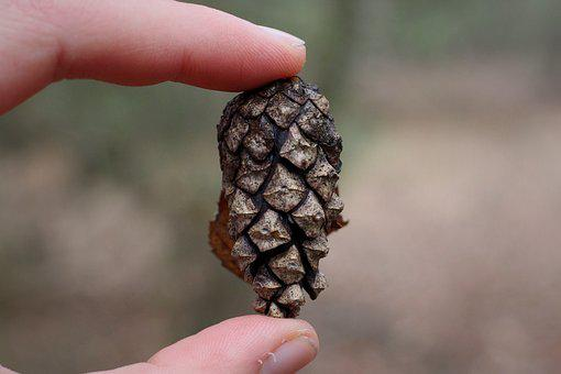Pine Cones, Kienapfel, Hand, Keep, Winter, Cold, Nature